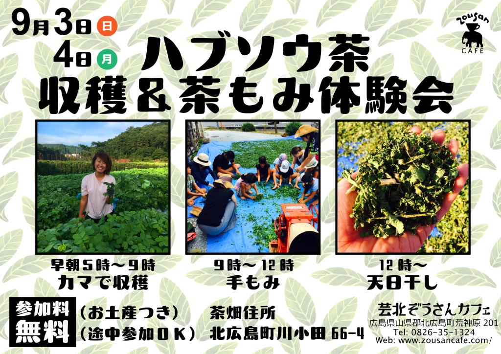 20170902_ハブソウ茶収穫体験